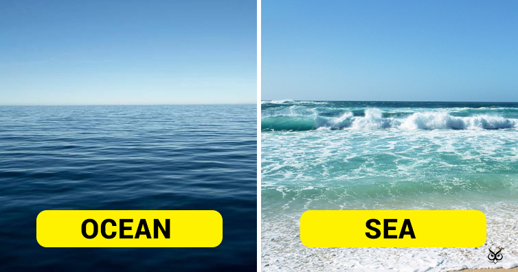 This Is The Difference Between Ocean And Sea I M A