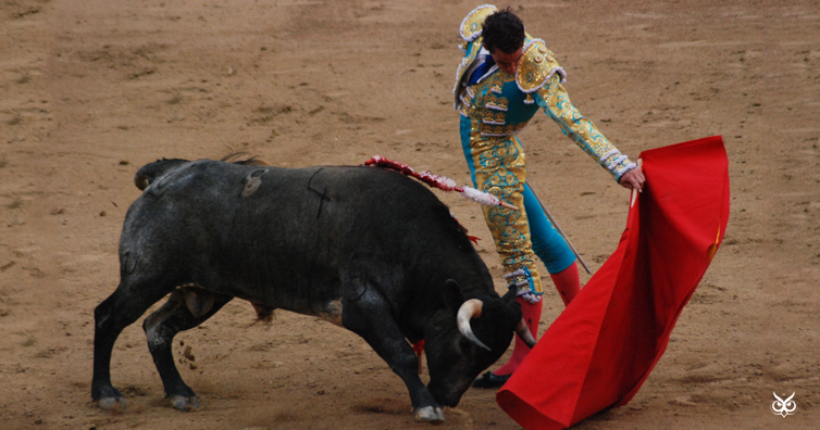 Myth Or Fact Are Bulls Really Attracted To Red Color