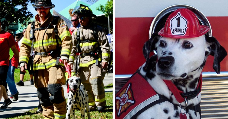 The Real Reason Why Firehouse Dogs Are Usually Dalmatians I M A