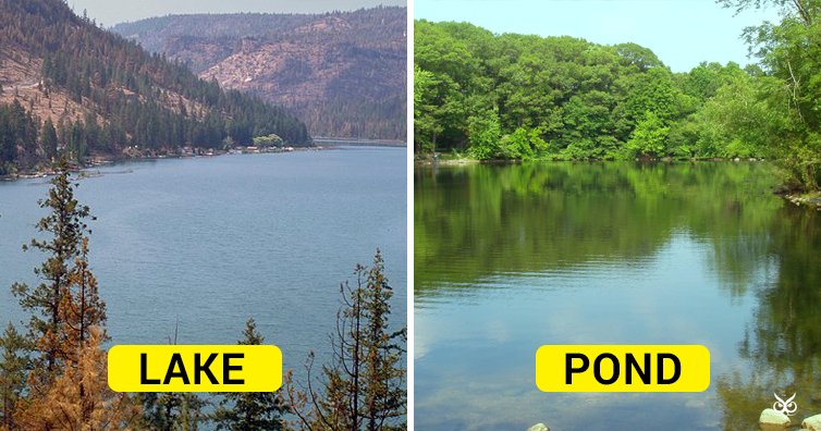 this is the difference between a lake and a pond i m a useless